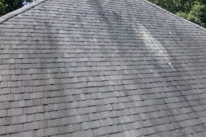 Removing Roof Mold From Your Michigan Home